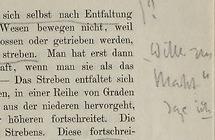 La bibliothèque de Nietzsche.